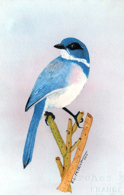 Ralph Patrick  'Bluebird', created in 2010, Original Watercolor.