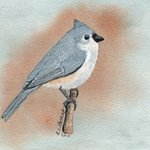 Tufted Titmouse, Ralph Patrick