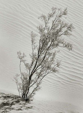 Ron Guidry: 'Mesquite and Dunes', 2010 Black and White Photograph, Botanical.