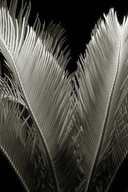 Ron Guidry: 'Sago 2', 2010 Black and White Photograph, Botanical.