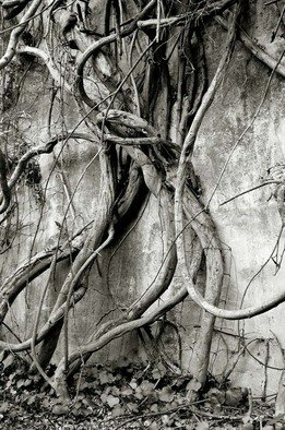 Ron Guidry: 'Vine Dance', 2010 Black and White Photograph, Botanical.