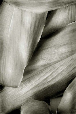 Ron Guidry: 'Xerox Leaves', 2010 Black and White Photograph, Botanical.