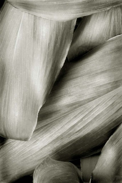 Ron Guidry  'Xerox Leaves', created in 2010, Original Photography Black and White.