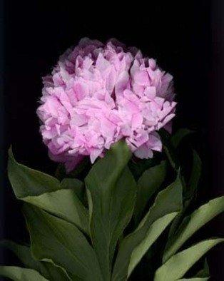 Rosemarie Stanford Artwork Gentle Flower, 2007 Gentle Flower, Botanical
