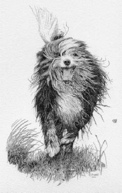 Jim Fogarty Artwork 'Molly', 2005. Pencil Drawing. Animals. Artist Description: Drawing of a' Beardie' or Bearded Collie drawn in graphite on paper. ......