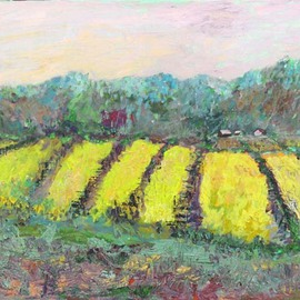 Mustard Among The Vines By Roz Zinns