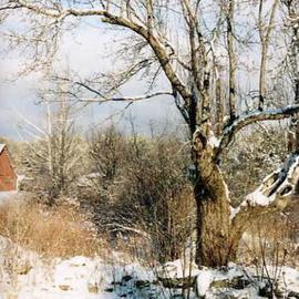 Ruth Zachary: 'Glorias View', 2004 Color Photograph, Landscape. Artist Description: The quiet, pristine beauty of New England winter snow in rural Limerick, Maine, USA. The white of the snowfall contrasts with the darks of the branches.  The verticality of the tree draws the eye upward and into the composition.  The small red shed in the lower left hints ...