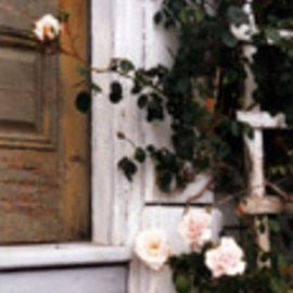 Ruth Zachary: 'Memorys Roses', 1992 Color Photograph, Floral. Artist Description:  Soft, lush pink roses against the old door of the antique Vaughn House on remote Monhegan Island, off the coast of Maine.  Romantic, lovely lines, textures, contrast. 11 x 14