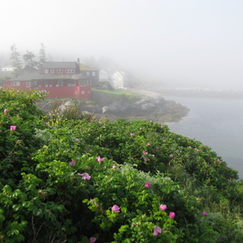 Ruth Zachary: 'Roses And Red House', 2012 Color Photograph, Landscape. Artist Description: Delicate ragusa roses in the foreground, iconic Red House and ocean all misty in the background. Monhegan Island, Maine. Larger sizes available ( 11 x 14, $98)...