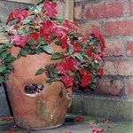 Strawberry Pot Garden, Ruth Zachary