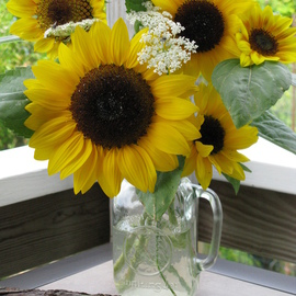 Ruth Zachary Artwork Susans Gift Sunflowers, 2012 Color Photograph, Floral