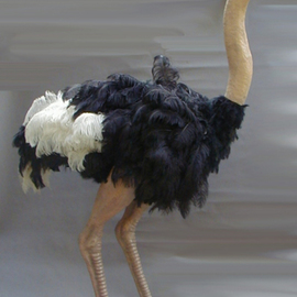 Mccullough Ryan: 'ostrich', 2008 Mixed Media Sculpture, Birds. Artist Description:  life size life like ostrich over 6ft ...