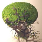 Bird Nest No  6 Wall Art Sculpture , Sal Villano