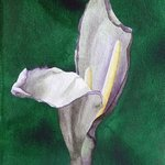 Baille con Carte 2 By Sarah Longlands
