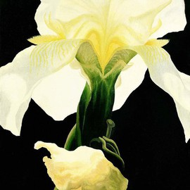 Sarah Longlands: 'Lantern', 1999 Oil Painting, Ethereal. Artist Description: The iris is one of my favourite flowers and this one I found gleaming from the darkening evening light of a friends garden.This picture is now available as an SA3 archival print see seperate entry.  ...