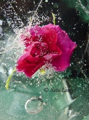 Satu Laurel Artwork In the Garden, 2012 Color Photograph, Floral