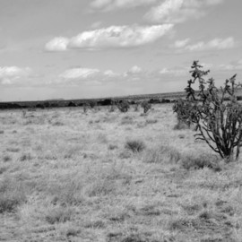Susan Brannon: 'Cactus', 2012 Black and White Photograph, Landscape. Artist Description:     Cactus, Albuquerque, New Mexico, desert, photography, susan brannon, clouds, landscape, black and White, Black & white, sky, home, Native American, Indians, reservation, clouds, sunlight                 ...