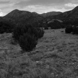 Susan Brannon: 'Cerillos New Mexico', 2012 Black and White Photograph, Landscape. Artist Description:  New Mexico, desert, Cerillos, photography, susan brannon, landscape, black and White, Black & white, sky, pinion, trees, sand, bushes, clouds           ...