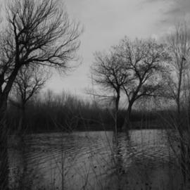 Susan Brannon: 'Trees', 2012 Black and White Photograph, Landscape. Artist Description:   Trees, water, fog, New Mexico, desert, photography, susan brannon, clouds, landscape, black and White, Black & white, sky, Bosque Del Apache, clouds, sunlight, silhouette                   ...