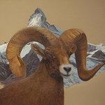 Big Horn Sheep, Scott Kinsman