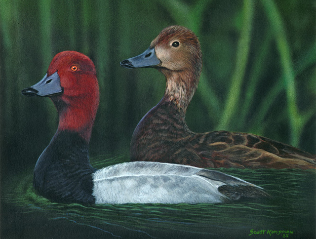 Scott Kinsman  'Red Headed Ducks', created in 2000, Original Painting Acrylic.