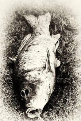 Stef Dorin Artwork The death fish, 2007 Black and White Photograph, Fish