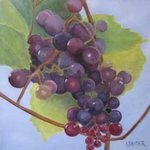 Grapes II By Lynette Seiter