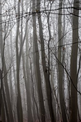 Frits Selier Artwork Misty woods, 2012 Color Photograph, People