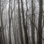 Misty woods By Frits Selier