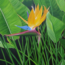 Steven Fleit: 'bird of paradise', 2019 Acrylic Painting, Floral. Artist Description: A beautiful flower found along a path bordering the ocean in South Beach, Miami, Florida. ...