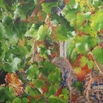 Bordeaux Vineyard 1, Steven Fleit