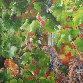 bordeaux vineyard 1  By Steven Fleit
