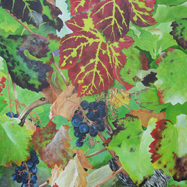 Bordeaux Vineyard 4, Steven Fleit