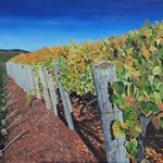 sonoma vineyard 2 By Steven Fleit