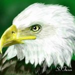 Eagle, Stephen Fusco