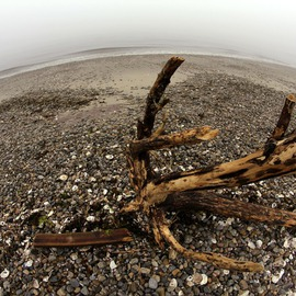 Driftwood  By Shelley Catlin