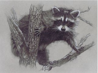 Pencil Drawing by Sid Weaver titled: racoon, 2014