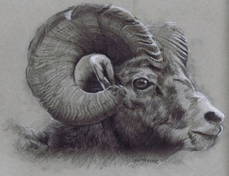 Pencil Drawing by Sid Weaver titled: ram, 2014