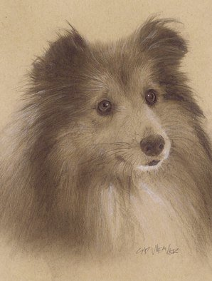 Pencil Drawing by Sid Weaver titled: sheltie, 2014