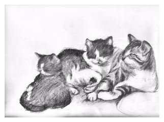 Siona Koubek Artwork kittens, 2011 Pencil Drawing, Cats