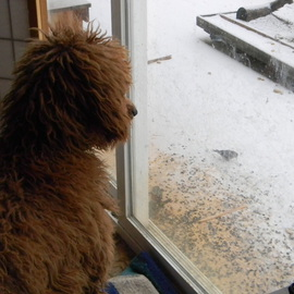 Debbi Chan: 'Charlie getting the hang of bird watching', 2011 Color Photograph, Humor. Artist Description:      photos from Idaho.          ...