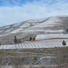 Debbi Chan: 'Colten creek vineyard gers snow', 2013 Color Photograph, Landscape. Artist Description:   Photos from Idaho.       these album leaves are in watercolor/ ink on rice paper.                                                                                                                   ...