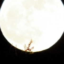 Debbi Chan Artwork May moon with branch, 2012 Color Photograph, Astronomy