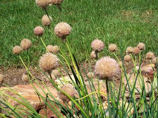 Color Photograph by Debbi Chan titled: a puff of balls, 2010