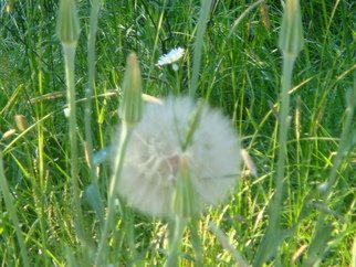 Color Photograph by Debbi Chan titled: a white puff, 2010