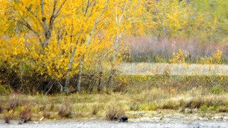 Debbi Chan: 'autumn colors on the clearwater ', 2010 Color Photograph, Beauty. Artist Description:        photos from idaho.                      ...