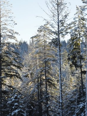 Debbi Chan: 'backlit morning', 2012 Color Photograph, Trees. Artist Description:                  photos from idaho.           photos from Idaho.     ...