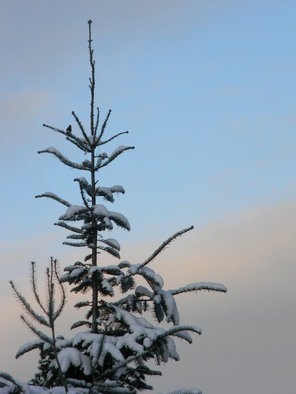 Artist: Debbi Chan - Title: birds in snow covered tree - Medium: Color Photograph - Year: 2010