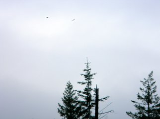 Artist: Debbi Chan - Title: birds in the distance - Medium: Color Photograph - Year: 2011