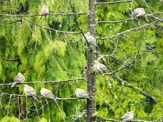 Artist: Debbi Chan - Title: birds of a feather hang together - Medium: Color Photograph - Year: 2011